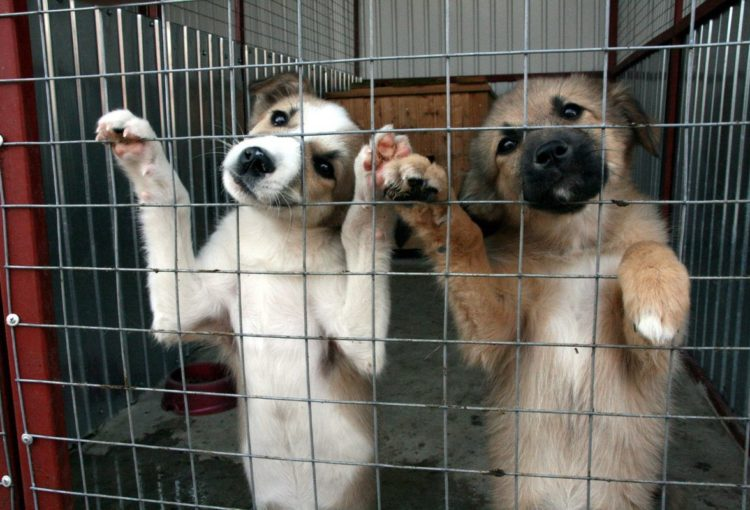 Как собака попадает в приют