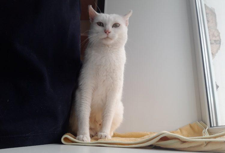 Кошка-блондинка ищет дом
