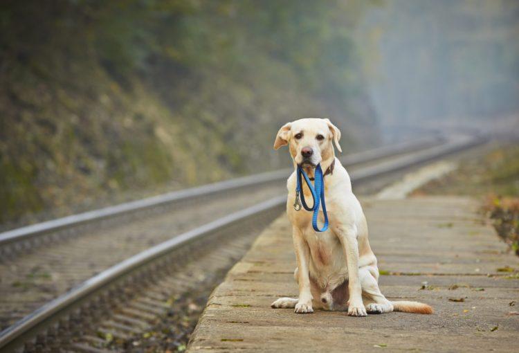 Потерянные собаки во Владимире