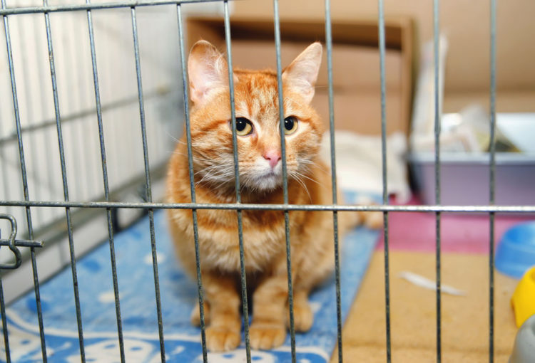 Кот в приюте