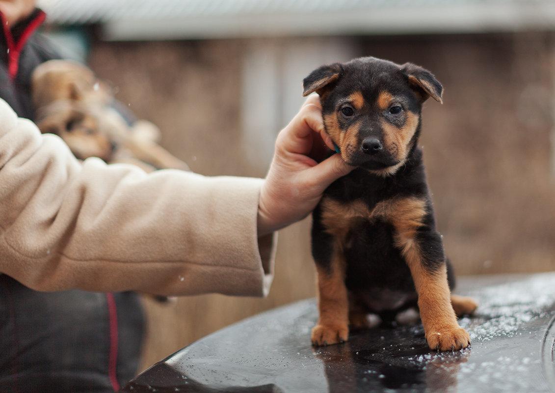 Каталог собак из приютов: как выбирать