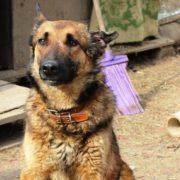 Добрая история собаки