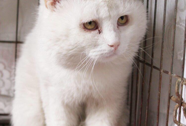 Белый кот ищет дом
