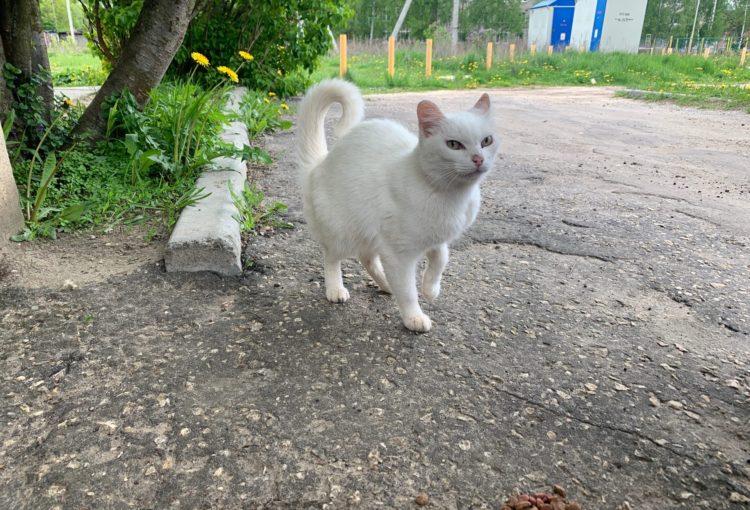Белая кошечка ищет дом