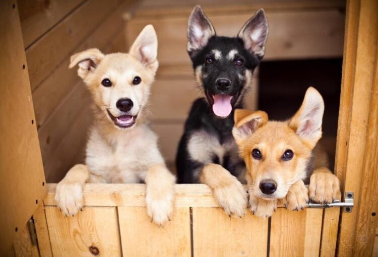 Некоммерческая помощь приюту для животных