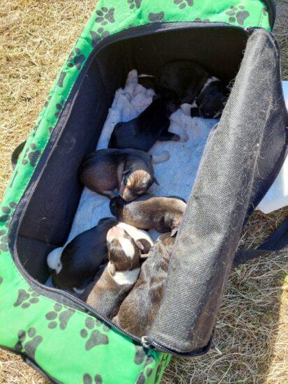 Как мы доставали злую собачку с щенками под домом