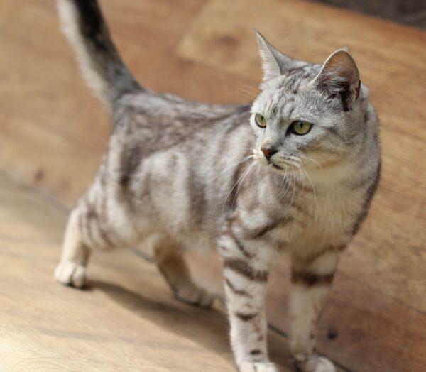 Котик-инвалид ищет дом