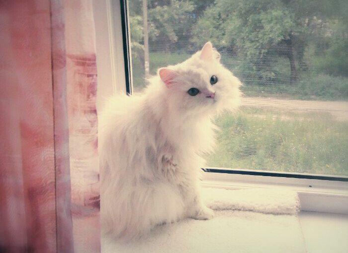 Белая кошка ищет дом